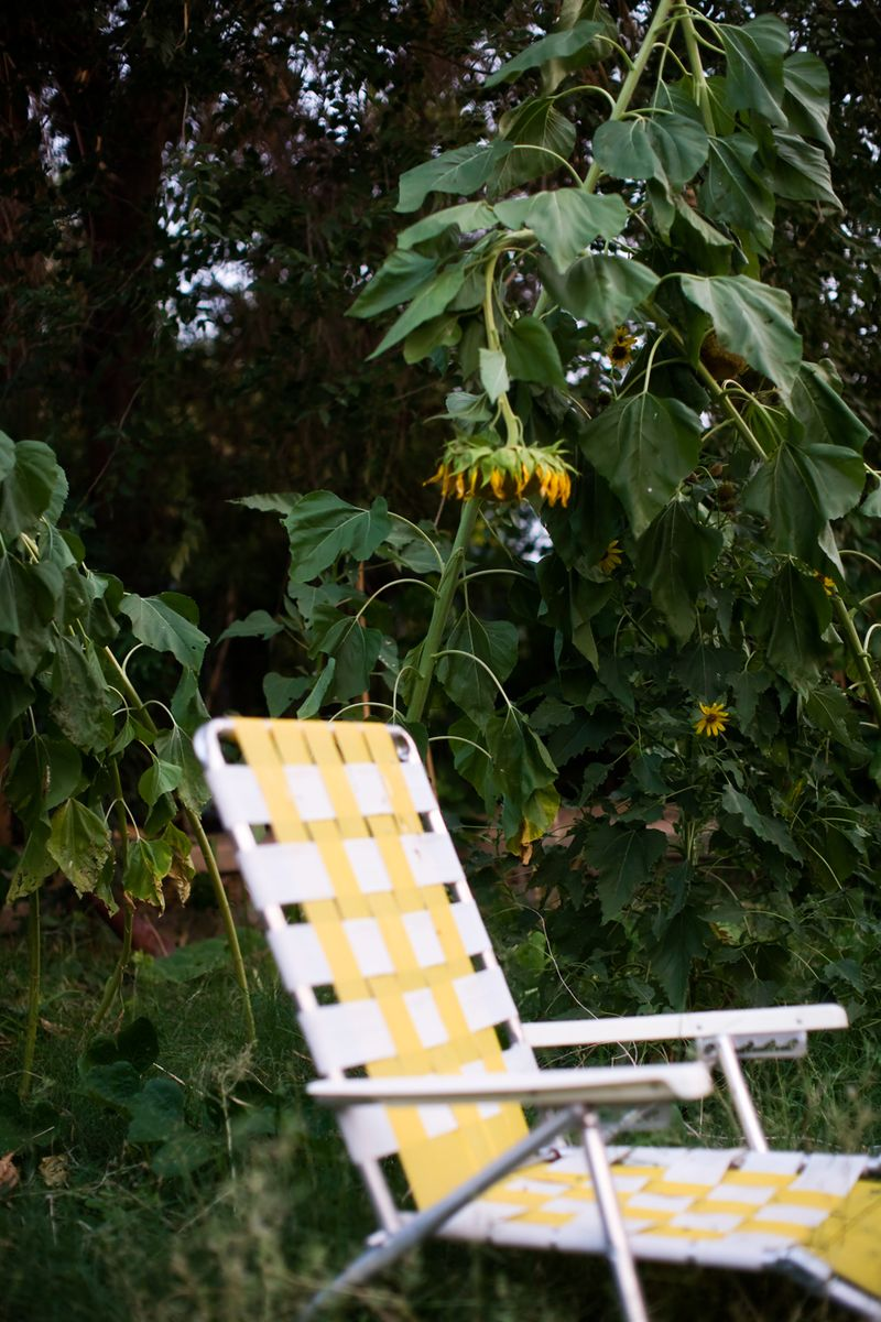 Sunflower-and-lounge-chair