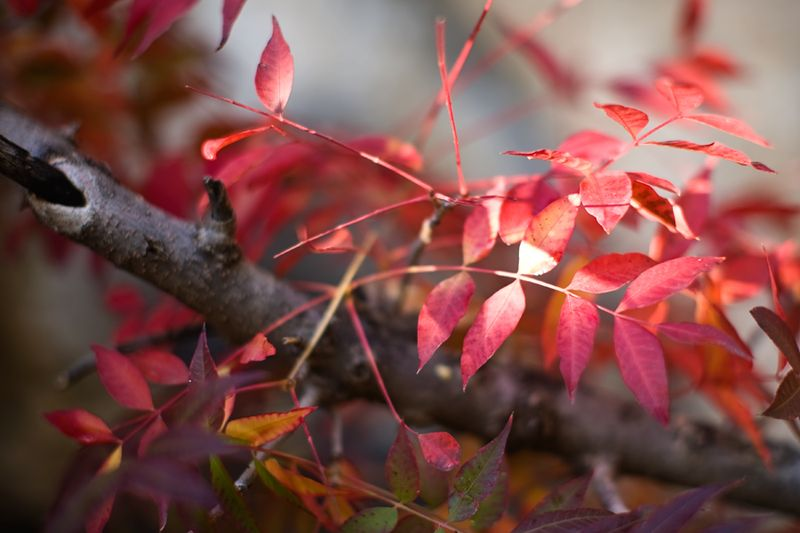 Red-leaves-at-the-Boyce-Thompson-Arboretum-Brenda-Eden-Photography