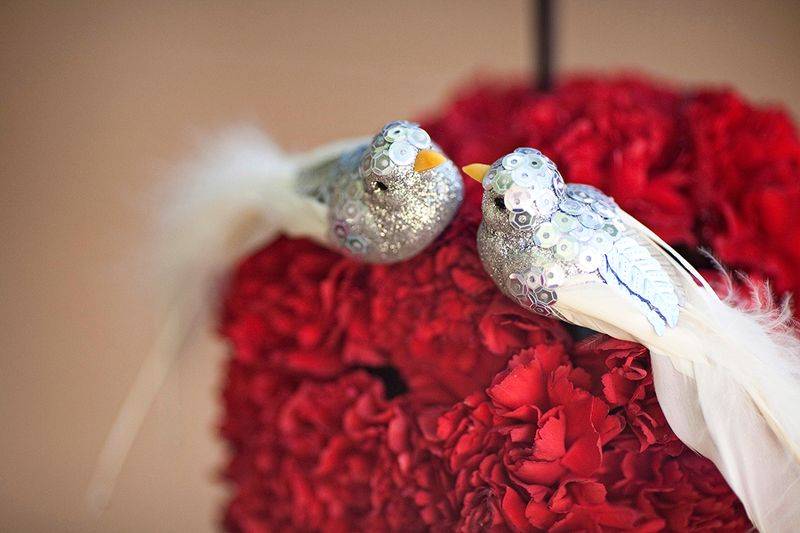 Lovely-Love-Birds-+-Red-Carnations~Jessica-and-Stan~Day-After-the-Wedding~copyright-BRENDAEDENPHOTOGRAPHY.COM