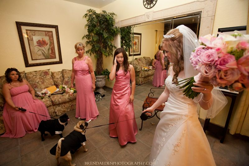 The-doggies!~Lan-and-Ron's-Wedding-at-Ashley-Manor-in-Chandler-Arizona~Arizona-Wedding-Photography~copyright-BRENDAEDENPHOTOGRAPHY.COM