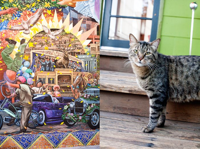 Mural-and-Kitteh---BRENDAEDENPHOTOGRAPHY
