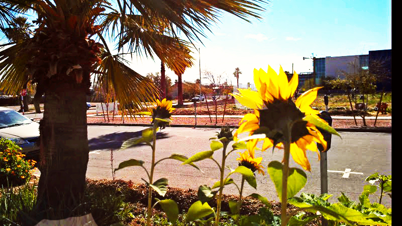 Valley-of-the-sunflowers-spring-edition-1